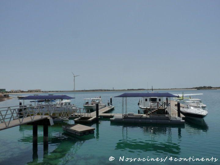 Notre arrivée sur Sir Bani Yas Island, Abu Dhabi