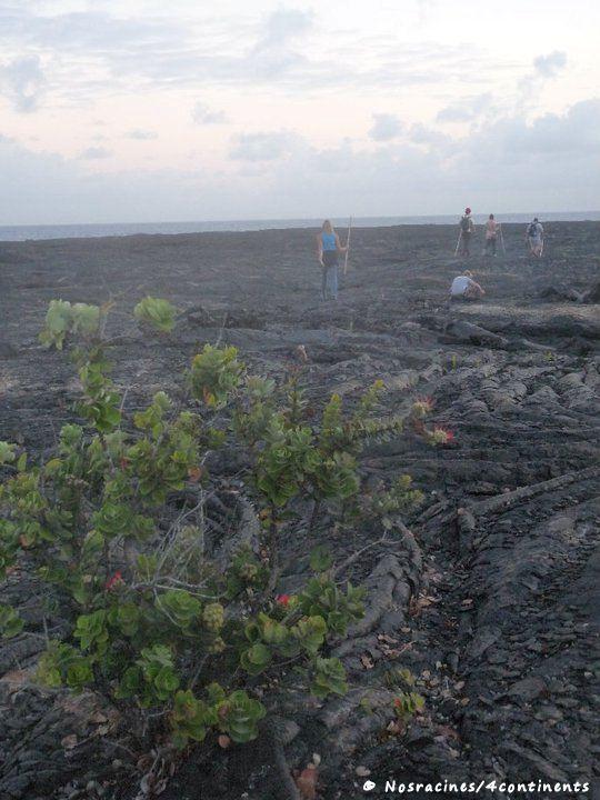 En route vers le volcan Kilauea, Big Island, Hawaii - 2010