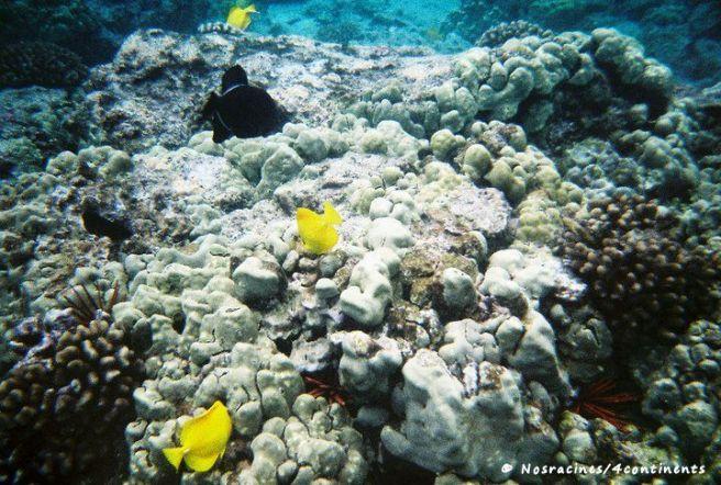 Kealakekua Bay, Big Island, Hawaii - 2010