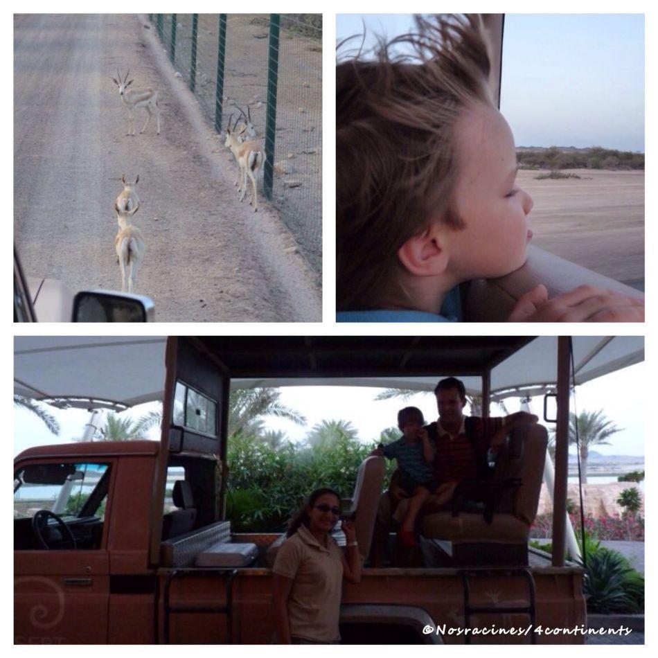 Safari sur Sir Bani Yas Island, Abu Dhabi - 2010
