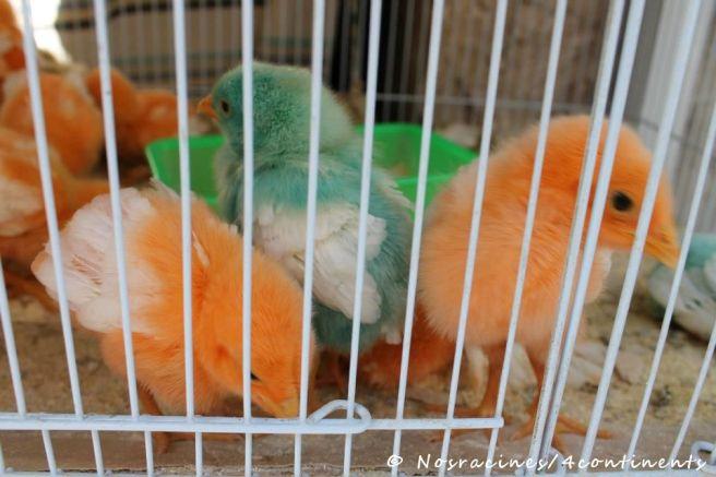 Quartier des animaux colorés artificiellement