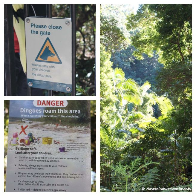 Attention aux dingos! Fraser Island - 2012