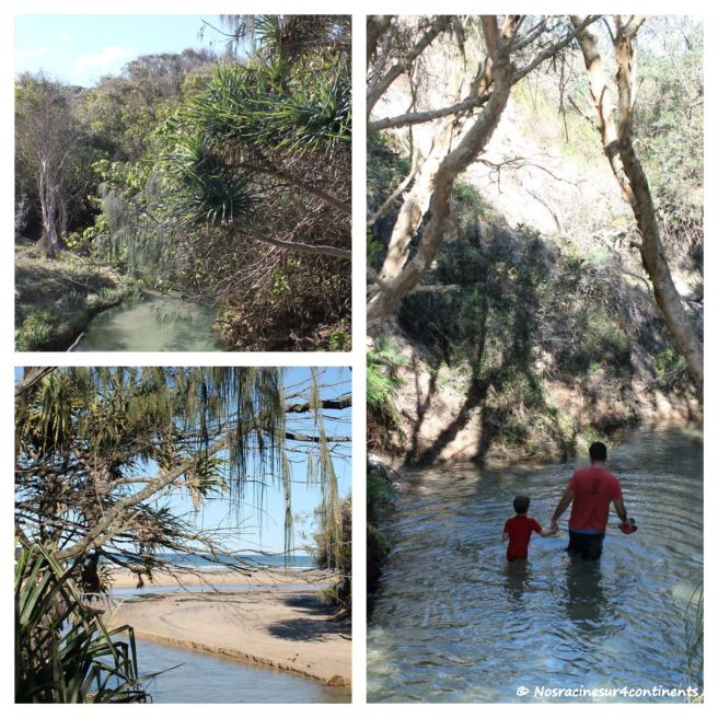 Eli Creek, Fraser Island - 2012