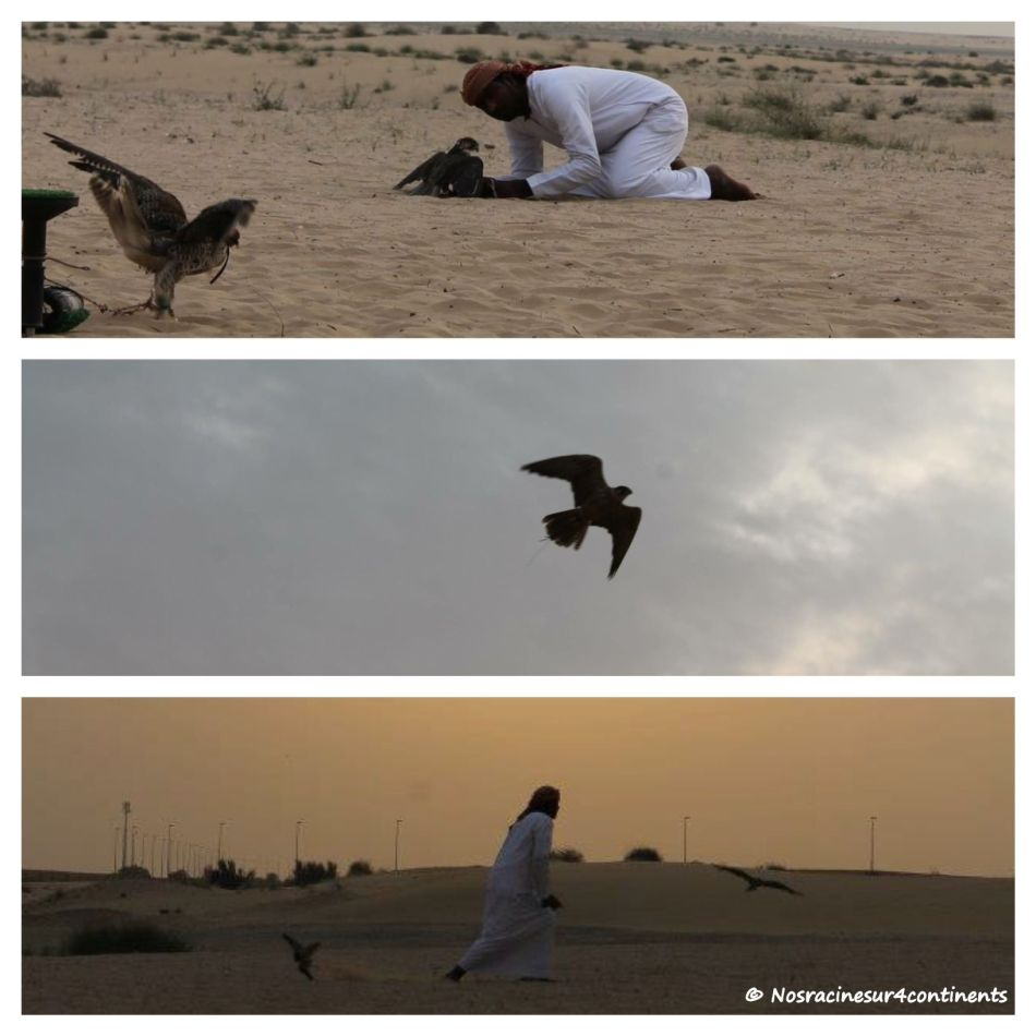 Falcon Show, Bab Al Shams Desert Resort, Dubaï - 2013
