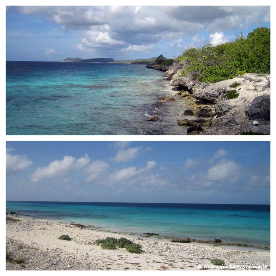 La beauté sauvage de Klein Bonaire - 2011