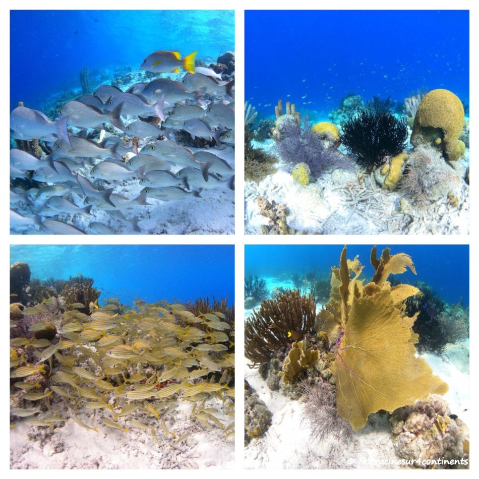 Les fonds marins colorés de Klein Bonaire - 2011 (crédit photo : Woodwing Bonaire)