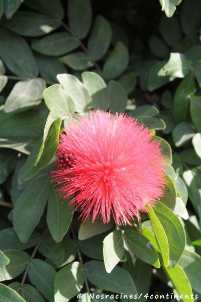Une flore variée, Coronado Island