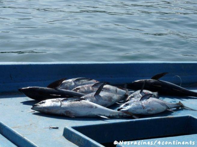 Les pêcheurs nous montrent leurs récentes prises, Port de Khasab