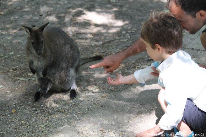 Notre fils cadet s'approche d'un bébé kangourou, dans la poche de sa maman