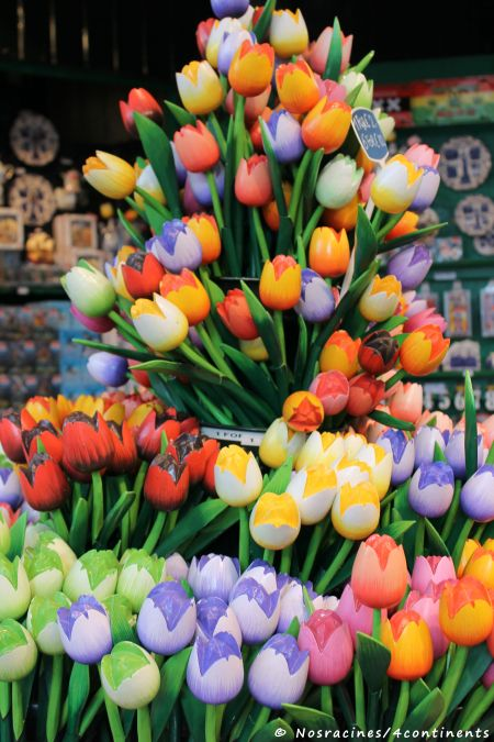 La tulipe, véritable symbole des Pays-Bas