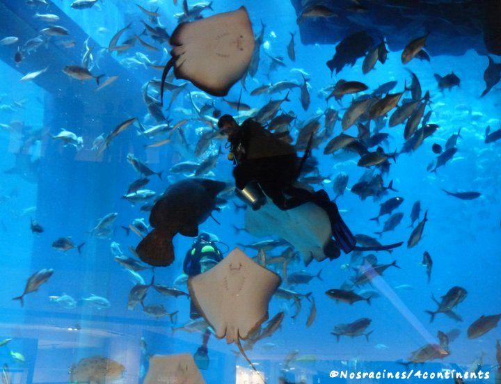 L'aquarium de Dubaï, Dubaï Mall