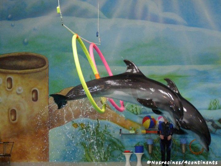 Dolphinarium, Creek Park