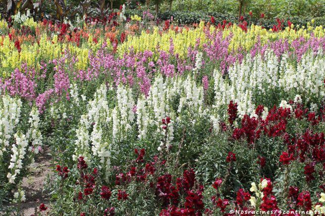 Le potager des fleurs du château de Chenonceau