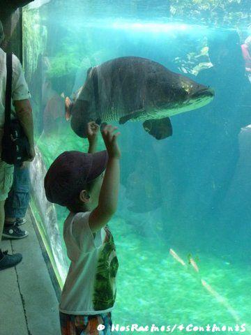 Hypnotisé par les créatures marines, Parc Zoologique de Paris