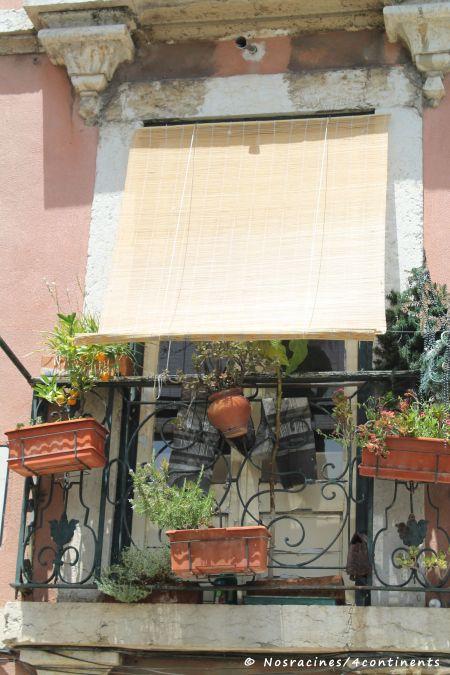 Les pots d'herbes suspendus aux fenêtres des amoureux