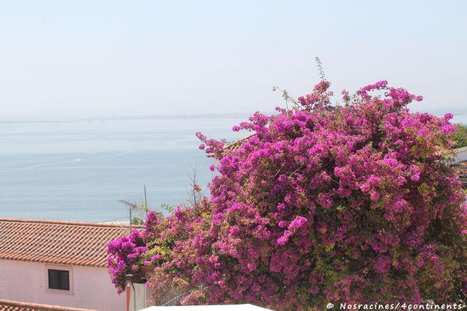 Les arbres fleuris et colorés de la terrasse Santa Luzia