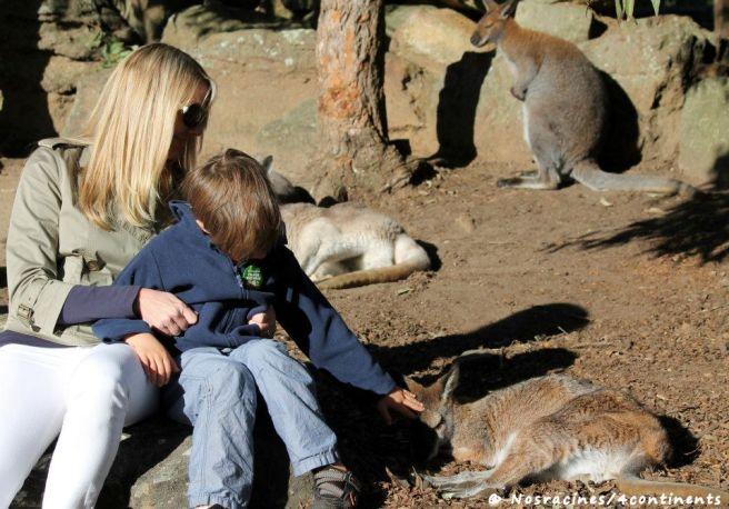 Moments tendres avec les wallabies du Taronga Zoo