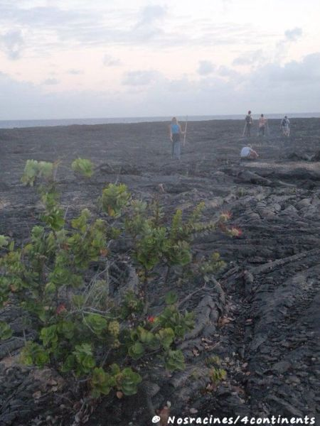 En route vers le volcan, Big Island