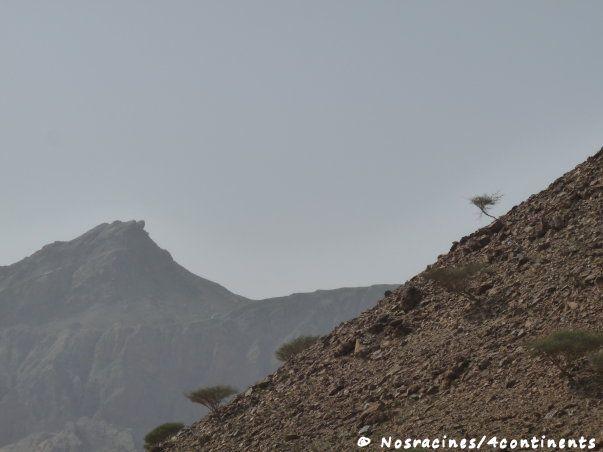 Fujairah15