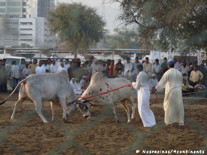 Fujairah19