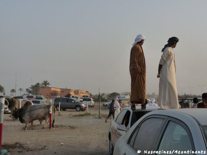 Fujairah20