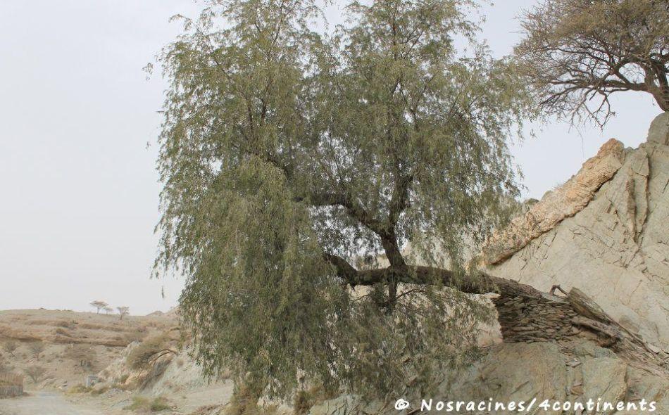 Fujairah31