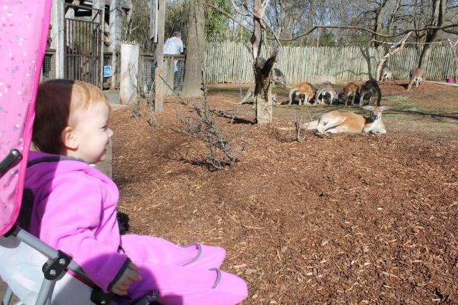 Nashville_Zoo2