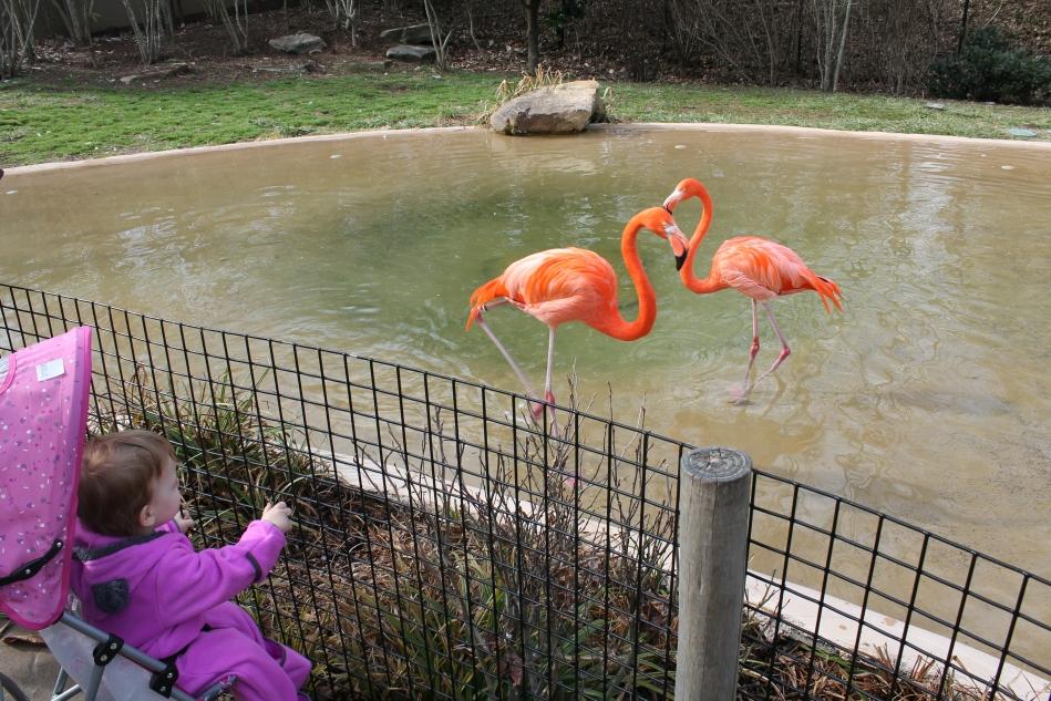 Nashville_Zoo3