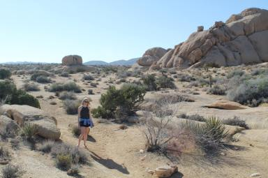 Joshua_Tree_National_Park_1