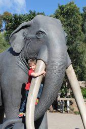 Zoo_San_Diego_1