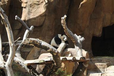 Zoo_San_Diego_3