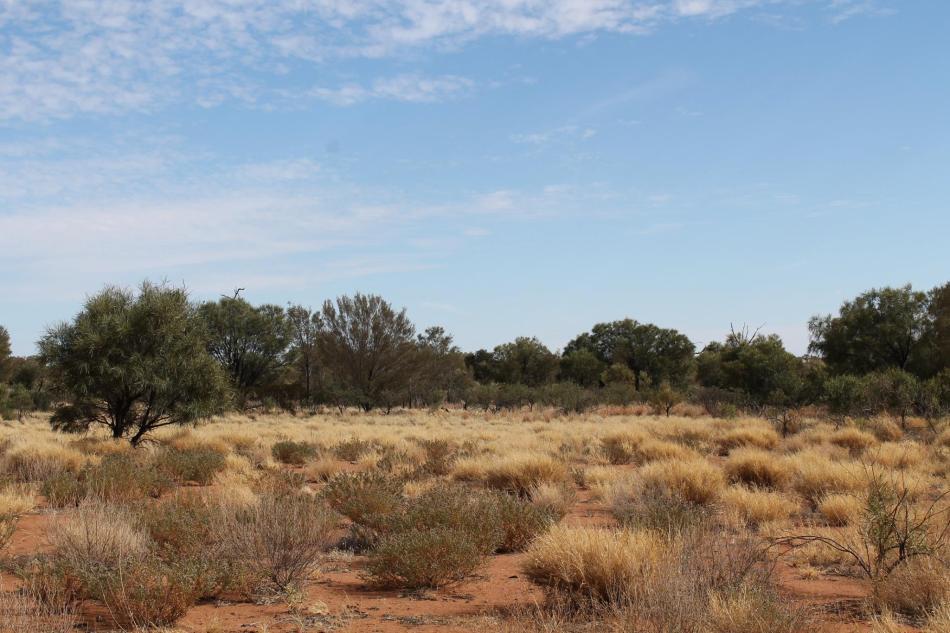 Uluru_26