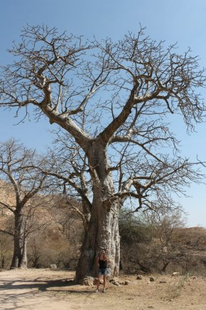 Baobab_5