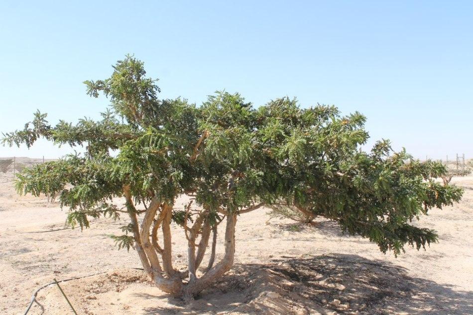 Wadi Dawkah_2