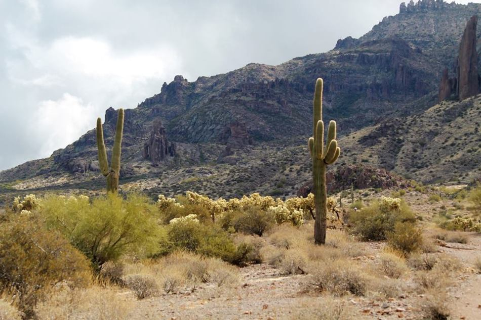Lost_Dutchman_State_Park10