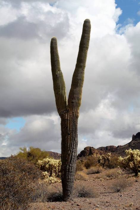Lost_Dutchman_State_Park11