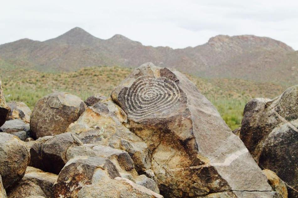 Saguaro_20