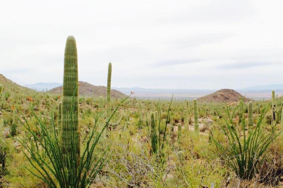 Saguaro_National_Park_7