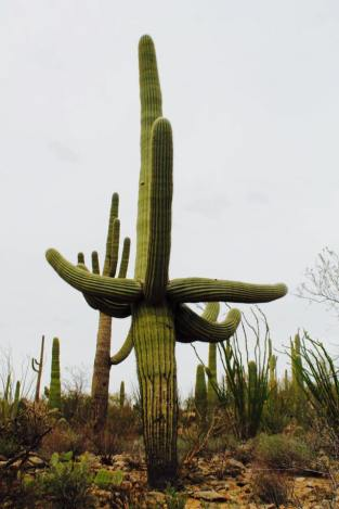 Saguaro_National_Park_8